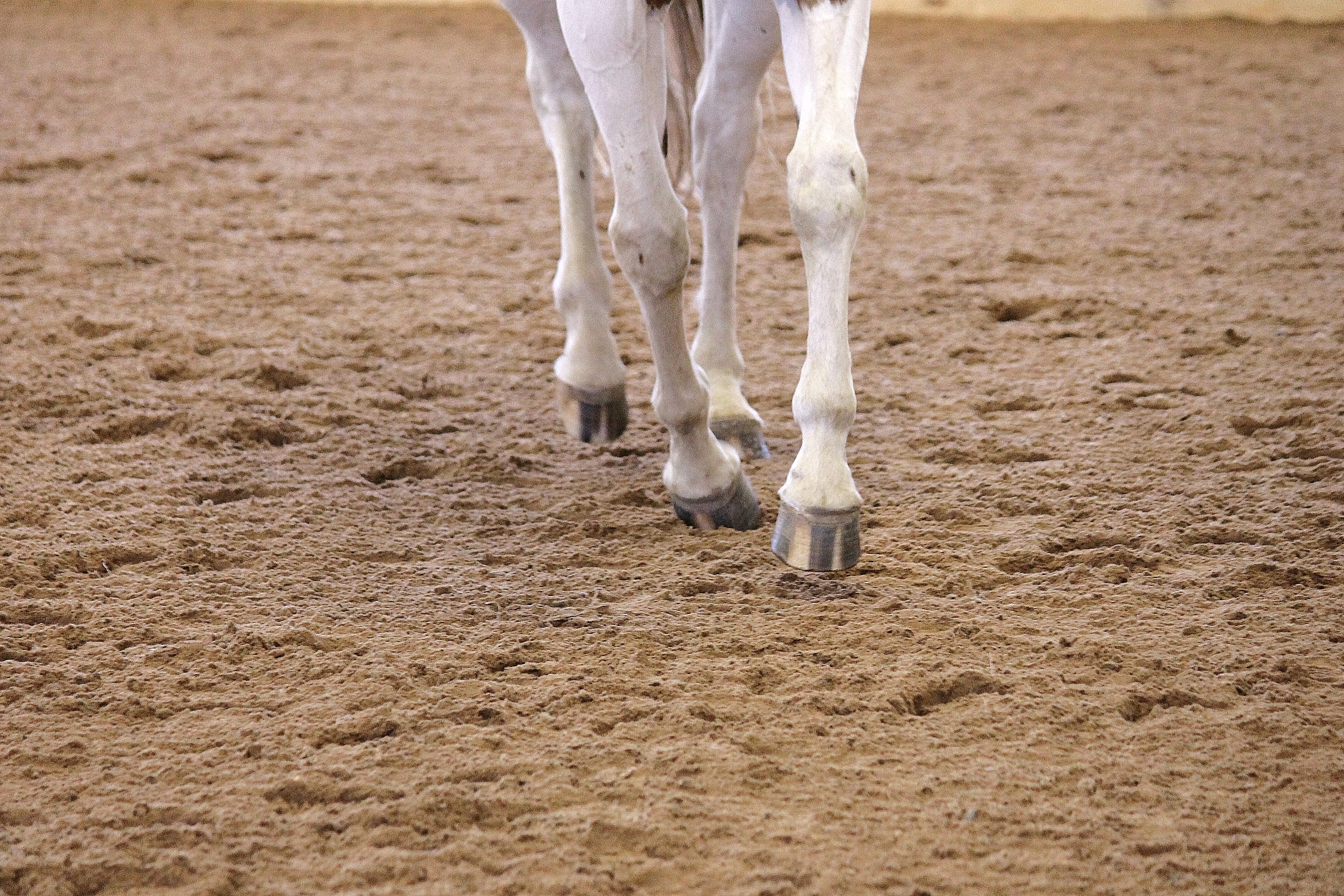 how to tell if your horse has sand colic